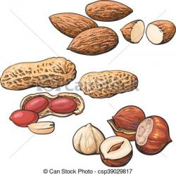 Almond clipart hazelnut