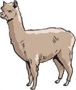 Lama clipart alpaca