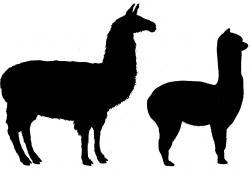 Lama clipart silhouette