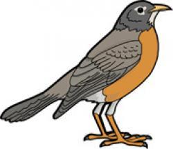 American Robin clipart
