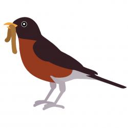 Brds clipart robin