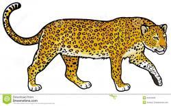 Amur Leopard clipart