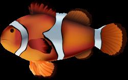 Clownfish clipart transparent fish