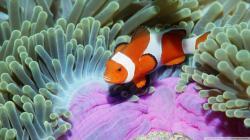 Sea Anemone clipart mutualism