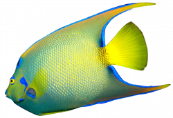 Butterflyfish clipart transparent background