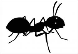 Shaow clipart ant