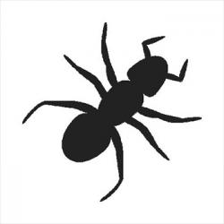 Ants clipart graphic