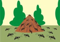 Ants clipart colony ant
