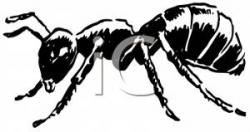Ants clipart side view