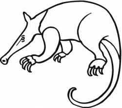 Aardvark Clipart Black And White