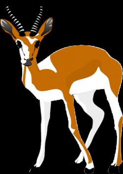 Springbok clipart