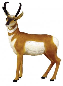 Pronghorn clipart