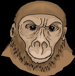 Ape clipart