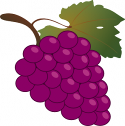 Drawn grapes
