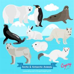Harp Seal clipart