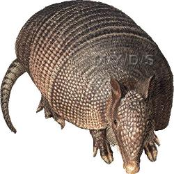 Armadillo clipart nine banded