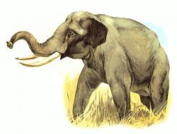 Tusk clipart elephant tusk