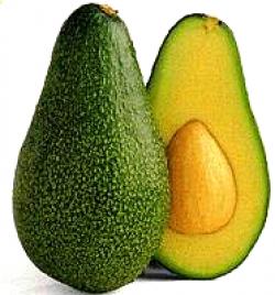 Avocado clipart fruts