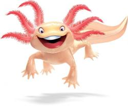 Axolotl clipart cartoon