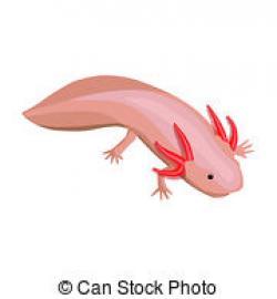 Axolotl clipart pink
