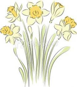 Daffodil clipart narcissus flower