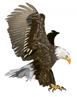 White-tailed Eagle clipart