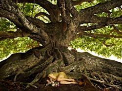 Banyan Tree clipart bangladesh national