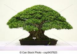Banyan Tree clipart bonsai tree