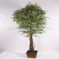 Banyan Tree clipart indoor