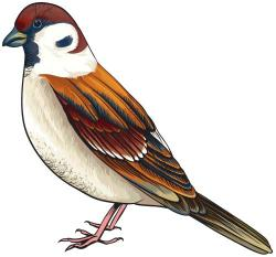 Finch clipart bird house