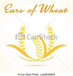 Barley clipart wheat crop