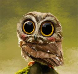 Barred Owl clipart big eye