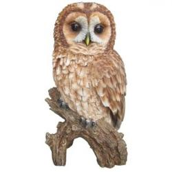Burrowing Owl clipart tawny owl