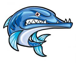 Barracuda clipart