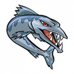 Barracuda clipart baracuda