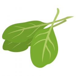 Basil clipart spinach leaf