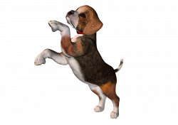 Perro clipart beagle