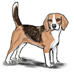 Beagle clipart puppy
