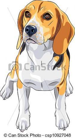 Beagle clipart vector