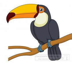 Toucanet clipart beak