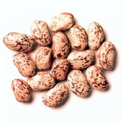 Beans clipart pinto bean