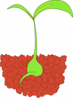 Bean clipart seedling