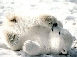 Cub clipart tundra animal