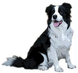 Collie clipart pet