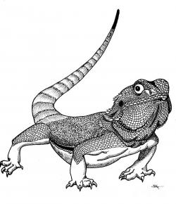 Drawn reptile bearded dragon