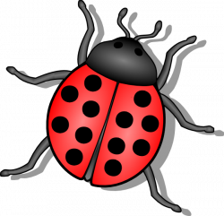 Bugs clipart transparent