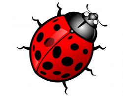 Dung Beetle clipart horned