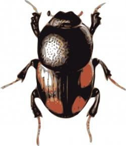 Beetles clipart insect