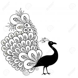 Drawn peafowl