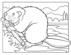 Beaver clipart coloring